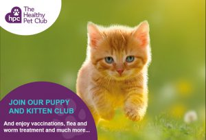 Healthy Pet Club kittens club advert