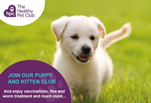 Healty Pet Club puppies club advert